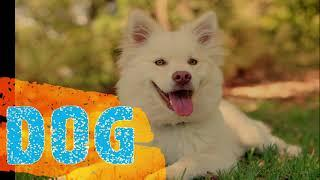 Learn Domestic Animals for Toddlers Play Group & Nursery Kids| Top 10 Domestic Animals for Kids |