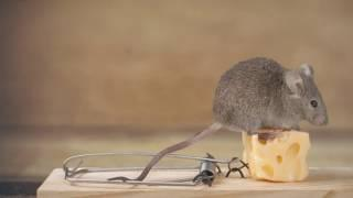 Top 10 Eco-Friendly Pest Control Methods