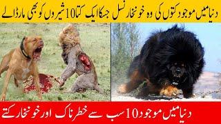 Top 10 MOST Dangerous Dog Breeds in the World (2020) | Dunya Knowledge