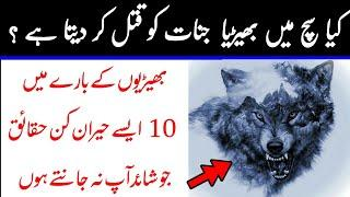 Top 10 Most Interesting And Amazing Facts About Wolf | Wolf Information In Urdu | AM Voice Urdu