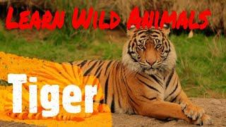 Wild Animals for Play Group Kids |Top 10 Wild Animals for small Kids | Wild Animals for KG Kids |