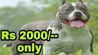 Top 10 Popular Dogs Breeds Price In india - dogs biography