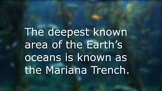 Top 10 facts about the Ocean
