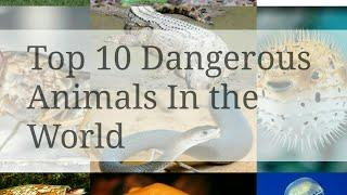 Top 10 Most Dangerous Animals In the World | DaaNi TV