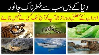 top 10 most dangerous animals in the world Urdu/Hindi.||information mat || Black mamba ,jelly fish.