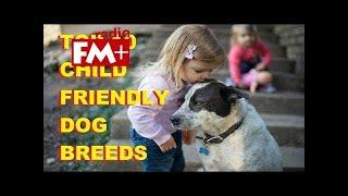 Top 10 Child Friendly Dog Breeds - Top 10 Friendly Dog Breeds In The World - Aspin TD Tiger