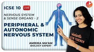 Nervous System and Sense Organs Class 10 | L2 | Peripheral and Autonomic Nervous System ICSE Biology