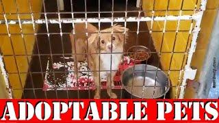 Homeless Dogs and Homeless Cats in an Animal Shelter Near Me who are Looking For New Homes