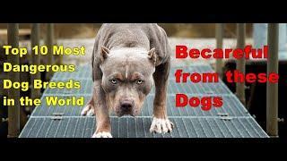Top 10 Most Dangerous Dog Breeds in the World (2020) || इन कुत्तों से सावधान रहें
