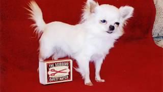 World Smallest Dog   Biggest currency   Top 10 Facts   S World's Facts   Fact Episode - 20