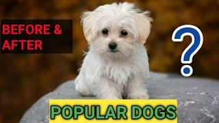 Top 10 Popular Dog Breeds | Before And After | Best Dog Breeds - I LOVE DOGS