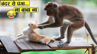 देखिये बंदर कैसे चुपके से मज़े ले जाते है | Funny Monkey Videos | Monkey Comedy | Intelligent Monkey