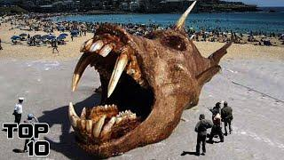 Top 10 Mysterious Things People Found On Beaches