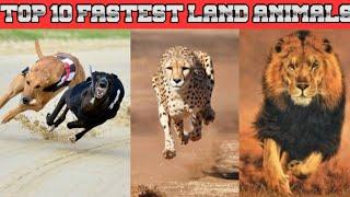 Top 10 fastest land animals in the word ||2020||top10king||