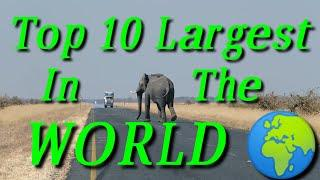 Top 10 largest in the world | Largest country  | most populated country | Largest ocean of the world