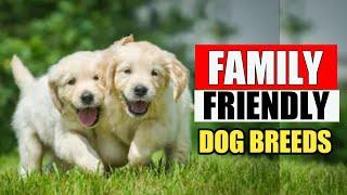 10 Family Friendly Dog Breeds / Family Dogs in india