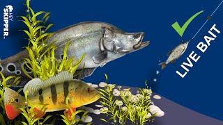 Fishing for EXOTIC AQUARIUM FISH w/ Live Bait! (Florida Fishing)