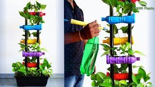 Money plant Growing in Your Living Room | Money plant Indoor Garden Decoration Idea//GREEN PLANTS