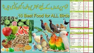 Best food for all birds in All season | top 10 best foods for birds Urdu Hindi