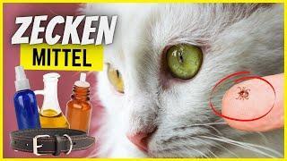 Top 10 Mittel gegen Zecken bei Katzen – Was wirkt wirklich?