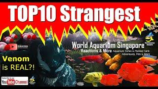 TOP10 Strangest Aquatic & Animals in the World Compilation Updated