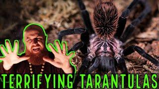 TOP 10 TERRIFYING TARANTULAS Halloween Special!