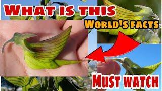 Top 10 amazing facts||interesting facts in hindi about world|| kya ye bird hai?