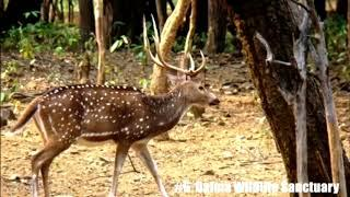 Top 10 Place to Visit in Jamshedpur 2021