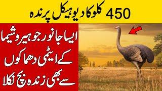 World Biggest 450Kg Giant Bird And Other Top Amazing Facts Around The World | Brian Facts