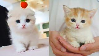 Baby Cats - Cute and Funny Cat Videos Compilation #10 | Aww Animals