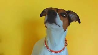 TOP 10 THE BEST DOG BARKING videos compilation Funny dogs