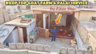 OVER 10 YEARS EXPERIENCE ROOF TOP GOAT FARMER | ASHAR BHAI STARTED PALAI SERVICE 2020