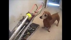 NEW Top 10 Cute and Funny Dog HQ Videos