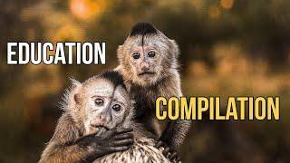 Education Compilation - Dean Schneider