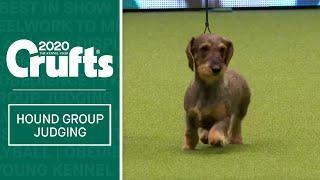 Hound Group Judging   Crufts 2020
