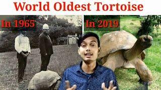 World Oldest Tortoise |10 Amazing Random facts | Fact Darbar