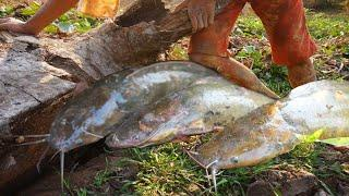 Fishing hole - Amazing Catch fish under the tree trunk - Unbelievable This Fishing 2020_Amazing Find