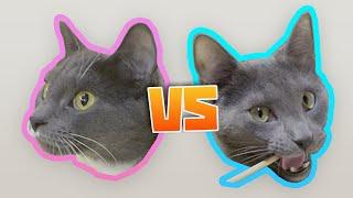 Cats try 42 snacks - Artyom vs neighbour's cat