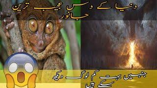 Top 10 unknown animals that actually exist The Word Urdu Hindi