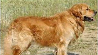 TOP 10 dog barking videosu compilation 2020