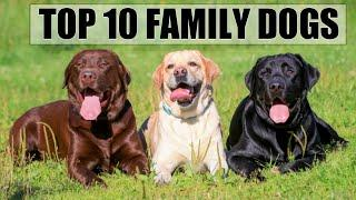 Top 10 family dogs   dogs in india   popular and friendly dogs   Mr.presto