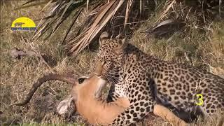 Dangerous Animals Saving The Life of Other Animals|DK TOP 10 Information|