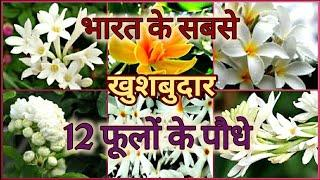 Top 12 Fragrant/ Scented / Aromatic Flower plants of India  भारत के 12 खुशबुदार फूलों के पौधे