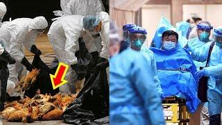 9 Deadliest Viruses of 21st Century