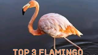 Top 10 most beautiful birds in the word || duniya ke 10 khubsurat panchhi || beautiful birds