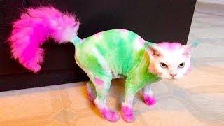 Hilarious Cat Fails ★ Funny Cat Video Compilation