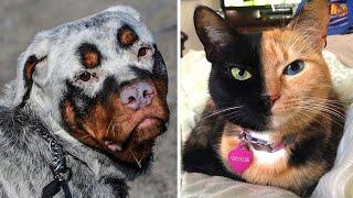 10 Animals That Were Born With Incredible Features