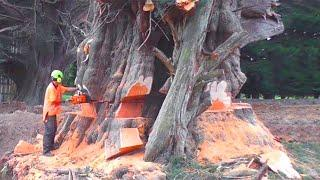Top 10 Dangerous Tree Felling With Chainsaw ! Idiots Tree Falling Skills Fails