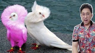 Top 10 Loài Chim Siêu Hiếm Và Đẹp Nhất Thế Giới