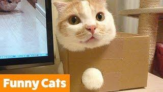 Funny Cat Bloopers and Reactions   Funny Pet Videos